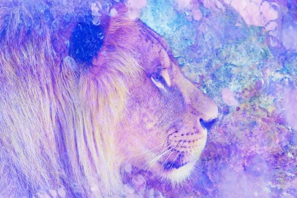 Asiatic lion - painting of lion collage on color abstract background