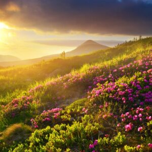 Natural Summer Landscape – Beautiful Mountain Meadow In Sunny Day