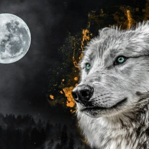 a grey wolf standing in the moonlight
