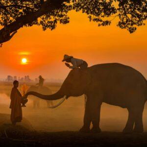 Shutterstock 1467022019