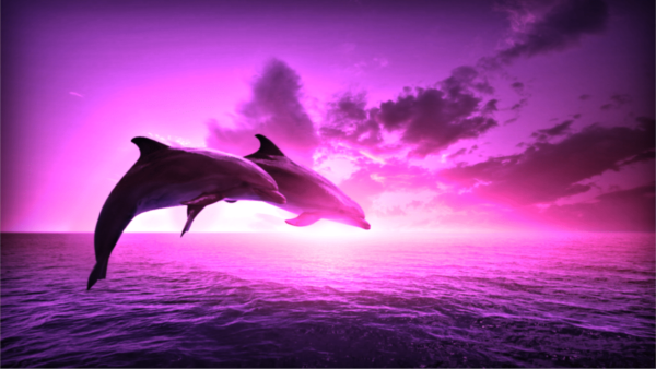 Two dolphins jumping over the sea in a purple sunset
